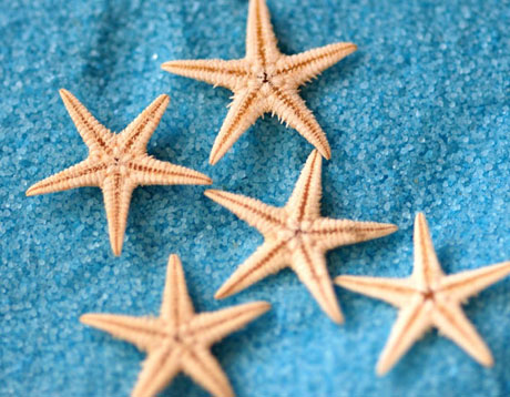 1-2cm Nature Starfish Beads (Sold in per package of 20pcs)