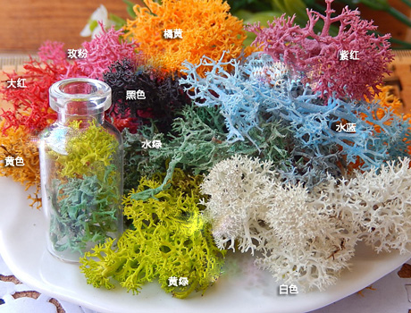 Dried Moss and Lichen For Glass Globe Bottles(Sold Package of 1g)