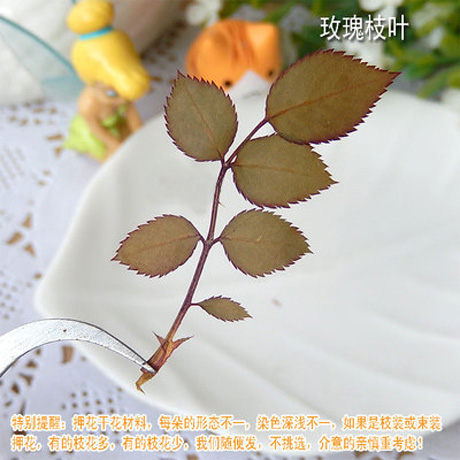 Real Rose Leaves Pressed Flowers Sold In Per Package Of 20pcs Real Dry Flower Stuffing Filler Wholesale Craft At Fsbiochem Com